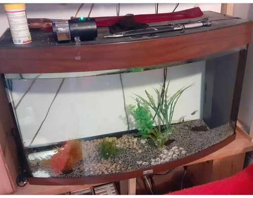 Aquarium Jewel 120 L + poissons + décorations