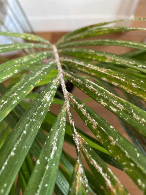 Plante d'intérieure